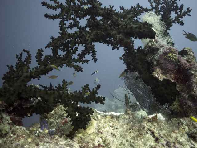 raja ampat, diving, scuba, the arenui
