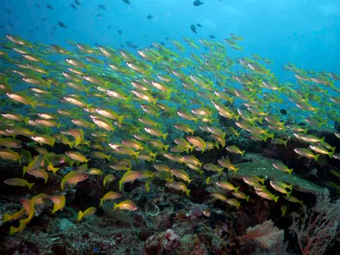 raja ampat, scuba, diving, misool, watch tower