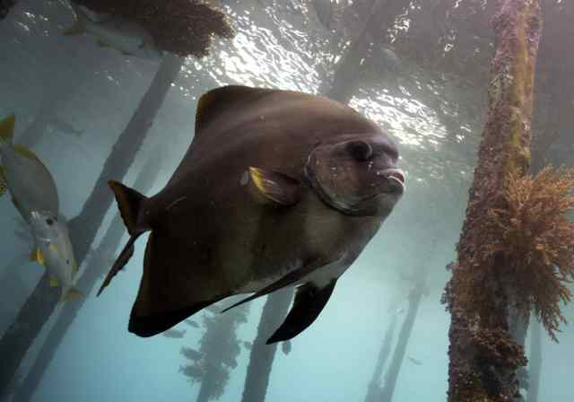 scuba diving, the arenui, underwater, our planet