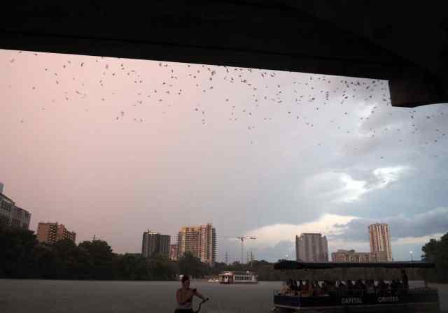 austin, bats, #exploremore, Texas, batshit crazy