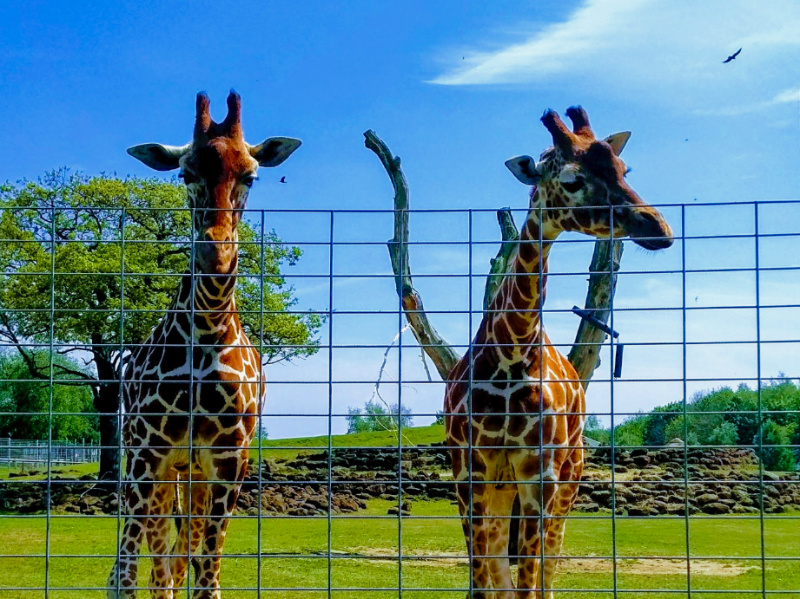 Africa Alive! – One of the Best Zoos in East Anglia