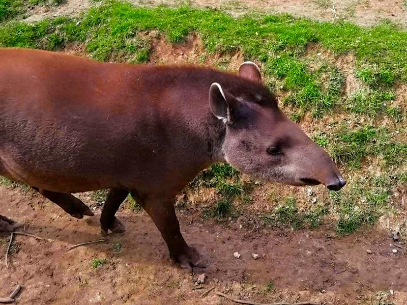 Linton Zoo Animals – Our Favourites