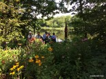 nice view of the pond and native plants