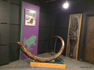 woolly mammoth tusk