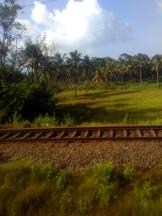 Kerala Through A Hazy Train Window