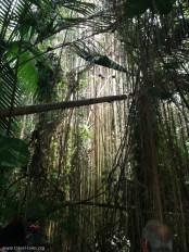 biosphere rainforest 1