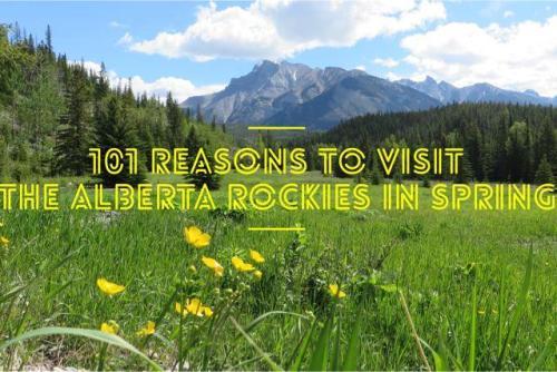 101 Reasons to Visit Alberta Rockies
