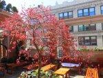 Hotel Giraffe Rooftop Garden
