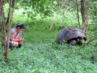 Galapagos giant tortoise with person