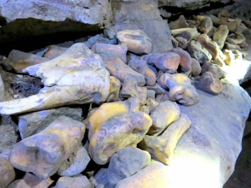 bones found in Rat's Nest Cave