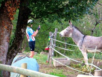 Gurad donkey Italy Hotel Osteria dell'Orcia