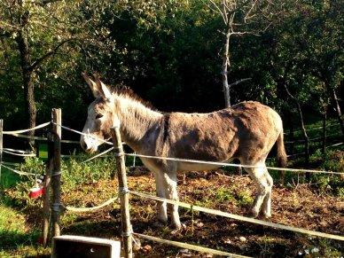 Italy bagno Vignoni Donkey