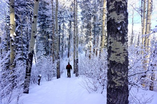 Image winter in Canada snowshoeing
