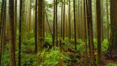 Avatar Grove, Eco Escape Travel