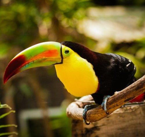 Macaw Mountain, Eco Escape Travel