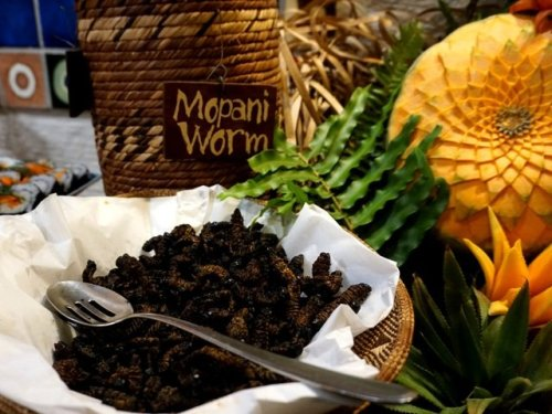 Mopani worms Africa