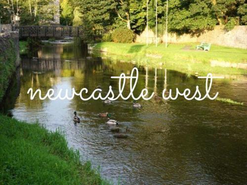 Newcatle West Ireland Arra river ducks