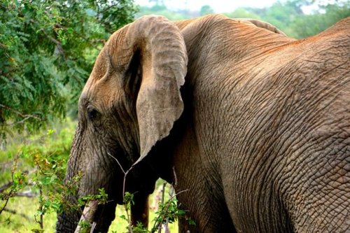 Elephant photo inspire Trip to Africa