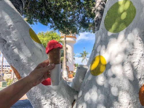 Pitaya Ice cream La Fuente la Paz Mexico