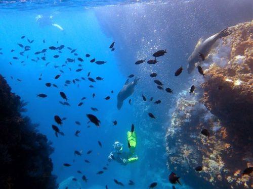 Snorkel with sea lions Los Islotos