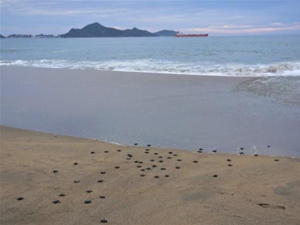 Turtle release Manzanillo Mexico