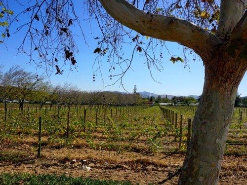 Vineyards Garden Route South Africa