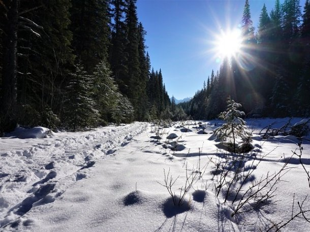 winter season quotes Wapta Falls trail