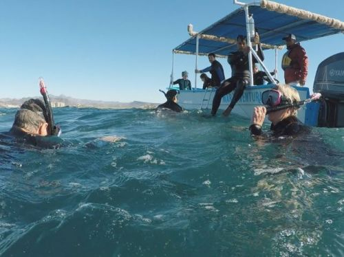 Whale shark swimming Mar Y Aventuras