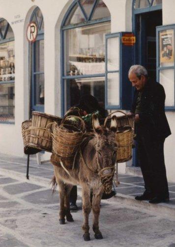Donkey in Mykonos