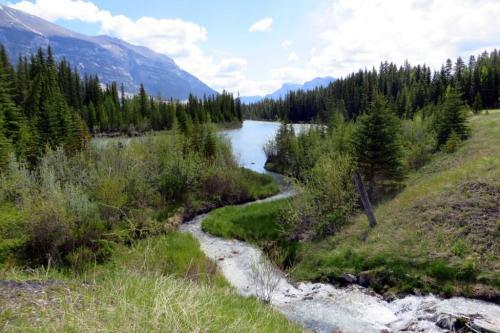 stream near Canmore Alberta