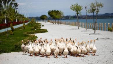Photo of بالصور: حيوانات تستولى على مدن شهيرة في غياب البشر