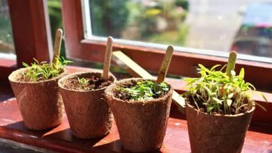 Photo of 4 عادات جيدة قد تفيدك أثناء الحجر المنزلي