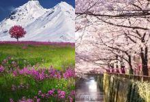 Photo of السياحة النباتية: أفضل الدول في 2020