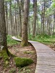 Along the Boardwalk and Among the Hemlocks