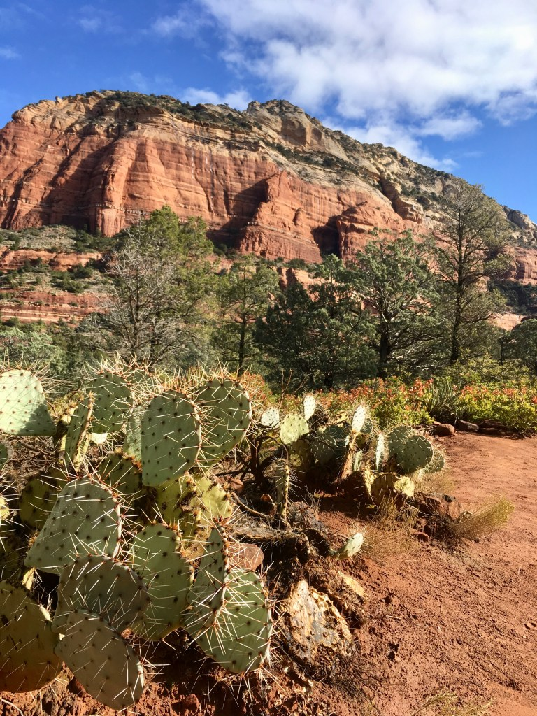 Prickly Pear Cactus Views at start of trail