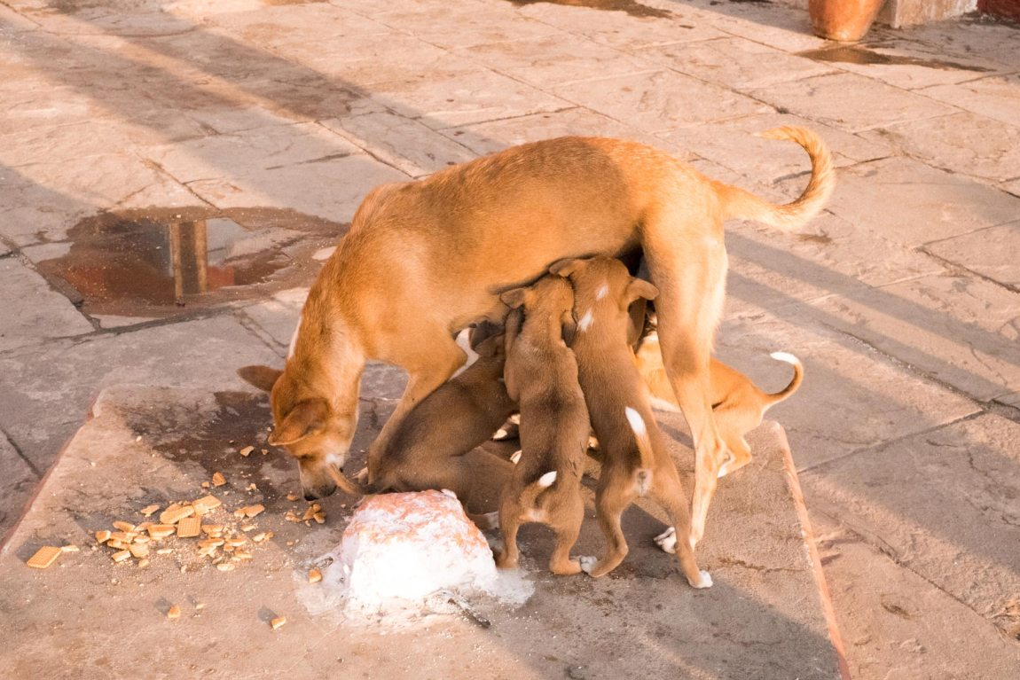A dog and puppies on the ghat in Varanasi