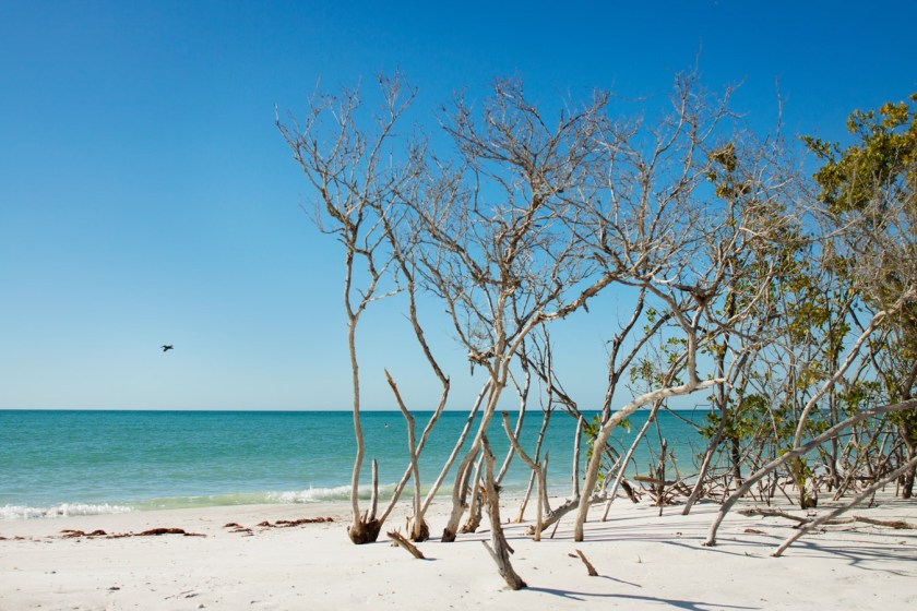 11 Reasons You'll Fall in Love with Anna Maria Island