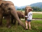 Elephants Chiang Mai Thailand