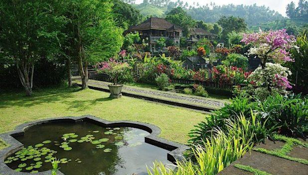 Rice terraces in Bali
