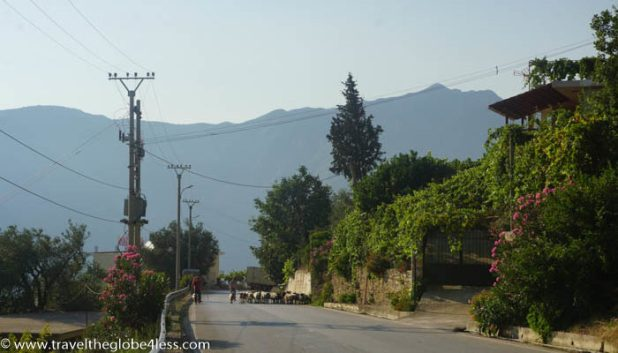 Animals on the road in Albania