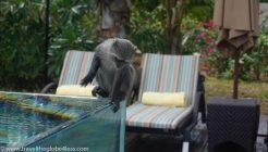 Monkeys at the Residence Zanzibar