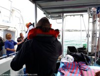 Cage diving with great white sharks-8