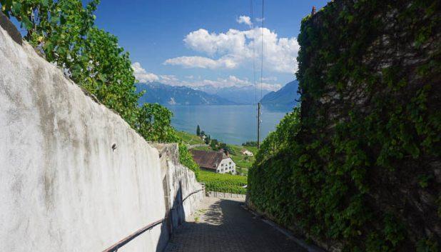 Paths through the Latraux vineyards