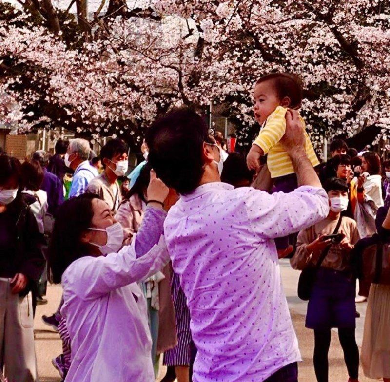 coppia giappone sakura ueno