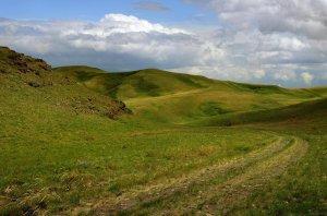 colline verde solitarie