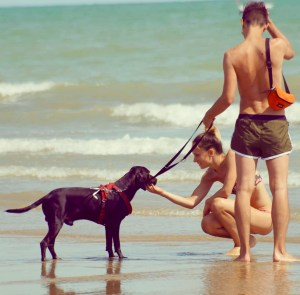 cane in spiaggia pet friendly