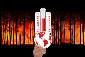 foresta in fiamme con termometro a 50 gradi