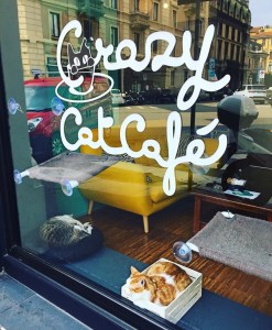 crazy cat café fonte google traveltherapists
