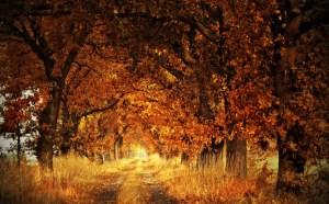 Dove si può ammirare la bellezza del foliage autunnale? Itinerari italiani!
