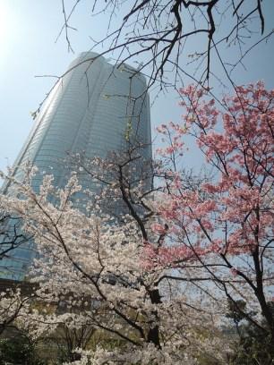 roppongi hills hanami traveltherapists